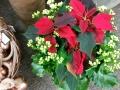 Poinsettia w-kalanchoe.jpg